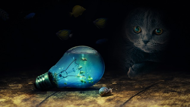 kočka u žárovky